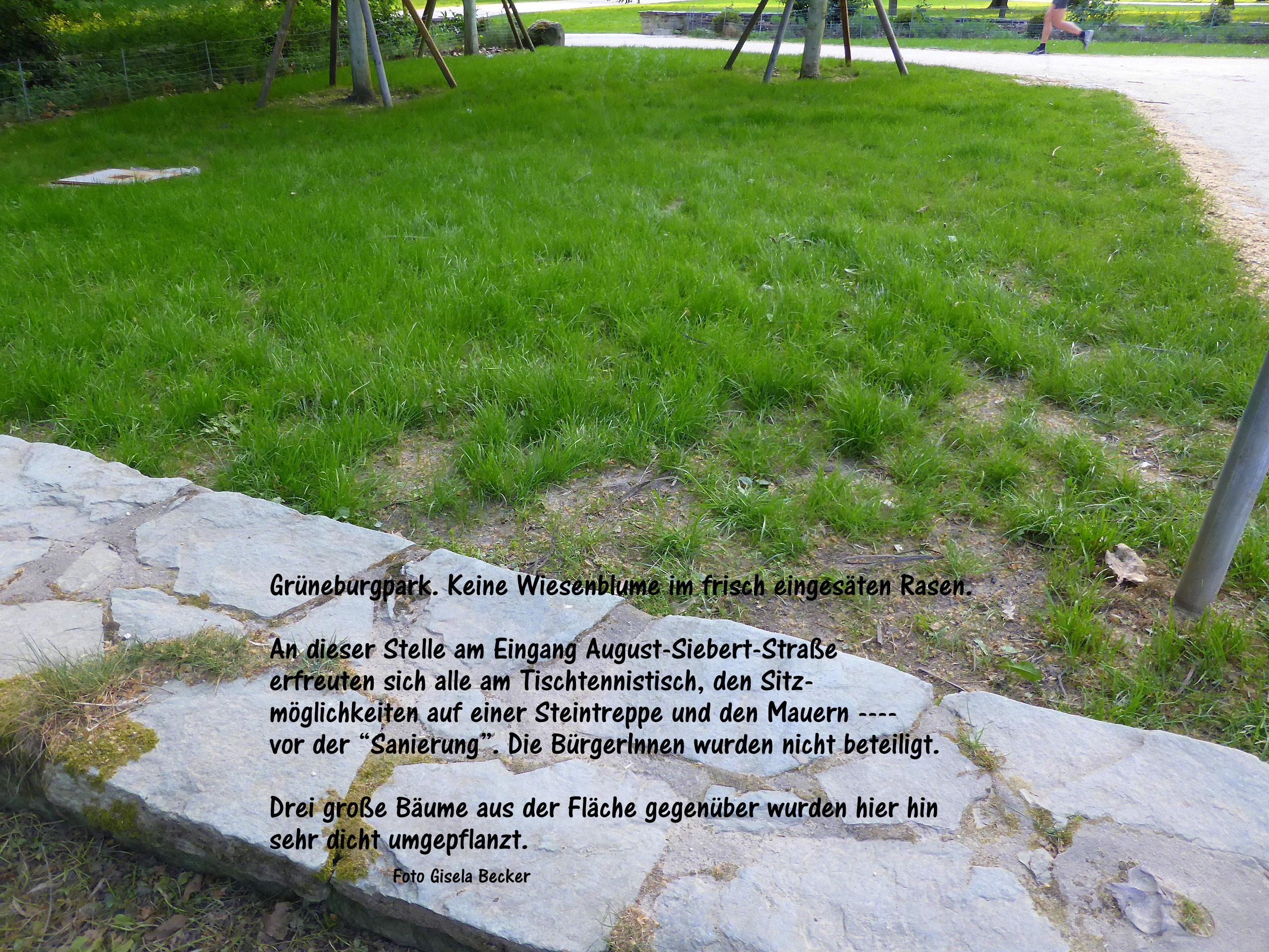 grueneburgparkinitiative mehr natur im park seite 3. Black Bedroom Furniture Sets. Home Design Ideas